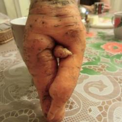 Фрукты и овощи причудливой формы