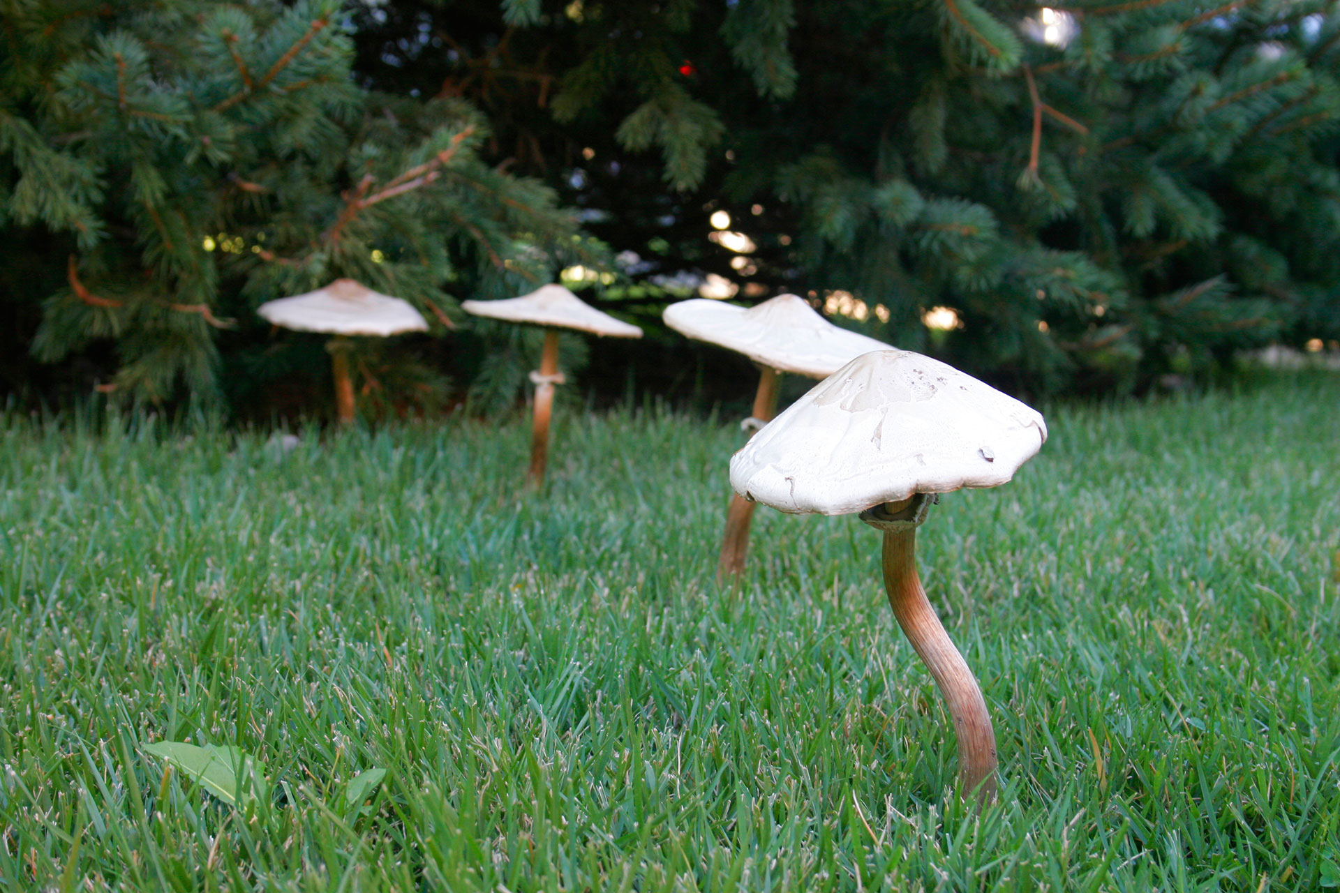 грибы лисички от паразитов детям